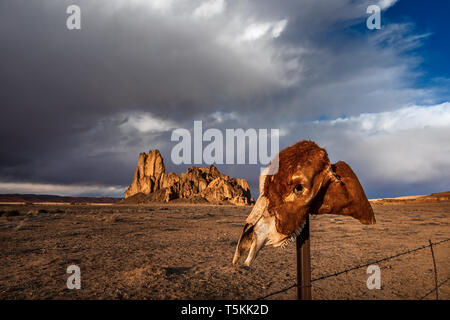 A horse skull rests on a fence post against a rugged, western desert landscape in Monument Valley, Arizona, USA. - Stock Photo
