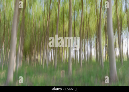 Abstract motion blur of trees in a forest - long exposure - Stock Photo