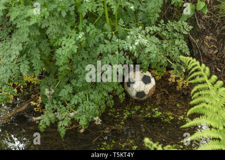 Slightly deflated plastic football lost in a drainage ditch. Missing ball, lost football. In among the weeds metaphor, game abandoned. - Stock Photo
