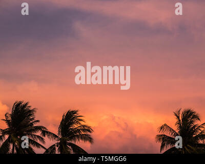Silhouettes Palms trees on the beautiful sunset background. Coconut trees against pink sky. Palm trees at tropical coast. Beautiful sunset - Stock Photo