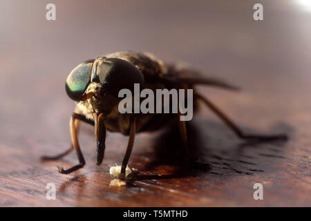 Fly on wood brown sruface - Extreme magnification - Stock Photo