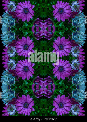 Fine art still life dark colorful graphical pattern made from macros of  white violetafrican/cape daisy/marguerite blossoms  in vintage painting style - Stock Photo