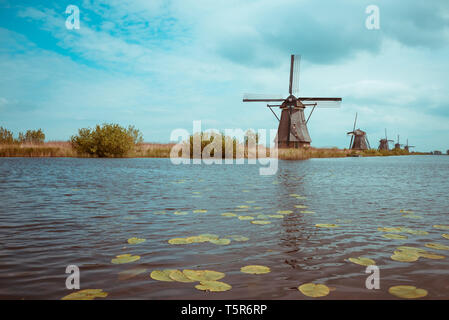 Traditional Dutch windmills in Kinderdijk near  Netherlands on a canal bank with lily vintage color toned - Stock Photo