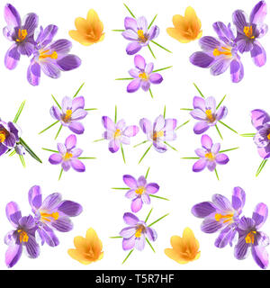 Spring floral seamless pattern with violet and yellow crokuses on white background. Floral photo collage for artistic design of fabric or wrapping - Stock Photo