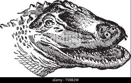 American Alligator is a large crocodilian reptile endemic to the southeastern United States, vintage line drawing or engraving illustration. - Stock Photo