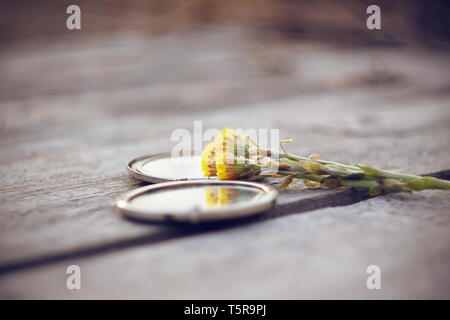 Healing flowers yellow coltsfoot lie with an open bivalve pocket mirror on a wooden gray table - Stock Photo