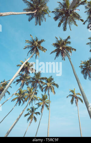 Long tropical coconut palm trees over blue sky perspective view from ground - Stock Photo