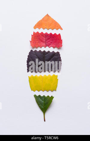 Autumn leaf made of sliced different color leaves - Stock Photo
