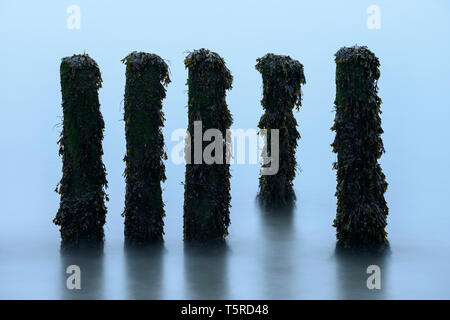 Decaying wooden groynes on Porlock Beach, Somerset, photographed using a long exposure to blur the water around them. - Stock Photo