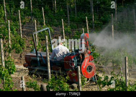 Photo Needs. Archival shots of people working on vineyards in Italy - Stock Photo
