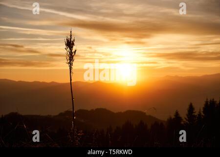Die Sonne taucht den Horizont in ein Flammenmeer - Stock Photo