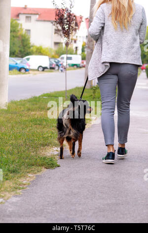 Woman walking with his female small mixed breed dog on leash, posing in front of camera. Portrait of lady, owner and cute half breed dog enjoys. - Stock Photo
