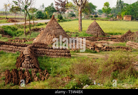 Cakes of cow dung neatly left to dry in the sun before storage in thatched cones for use as fuel for cooking or heating - rural village northern India - Stock Photo