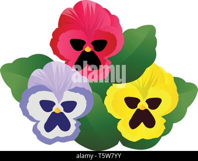 Vector illustration of blue pink and yellow pansy flowers with green leafs on white background. - Stock Photo