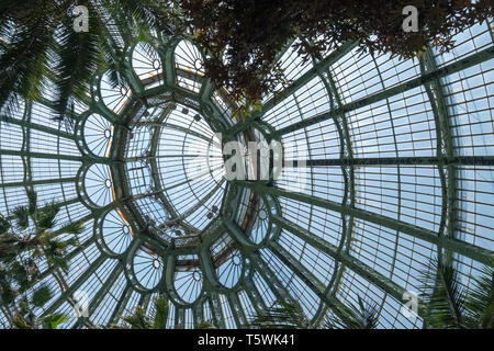 Domed roof of the Winter Garden at the Royal Greenhouses at Laeken. The Winter Garden houses palms, ferns and exotic tropical flowering plants. - Stock Photo