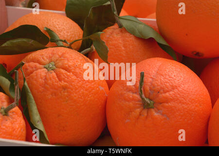 juicy oranges organically grown lie in wooden boxes on market, fresh and ripe oranges - Stock Photo