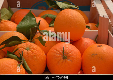ripe and tasty oranges for sale, juicy oranges organically grown lie in wooden boxes on market - Stock Photo