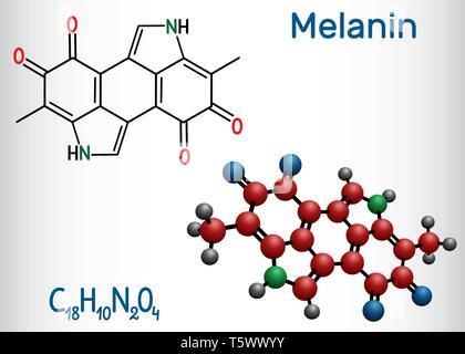 Melanin  molecule. Structural chemical formula and molecule model. Vector illustration - Stock Photo