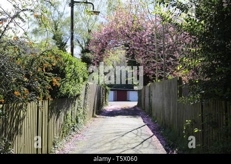 cherry blossom pathway to garage in summer with green trees - Stock Photo