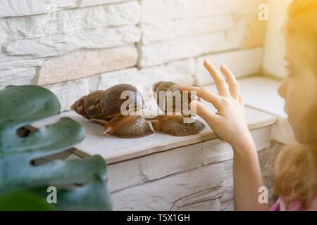 A little girl is playing with two big Achatine snails - Stock Photo