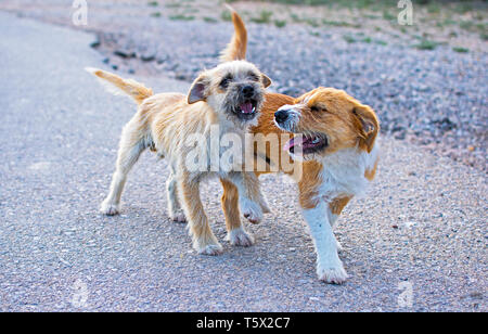 Two small stray dogs lonely on the asphalt road. - Stock Photo