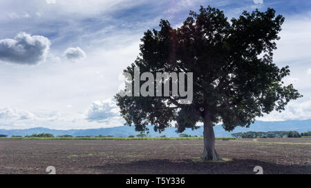 A leafy tree in the middle of the uncultivated land. - Stock Photo
