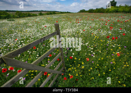 Old gate leading to wild flower meadow Chilterns Buckinghamshire UK June - Stock Photo