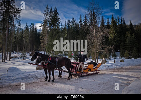 Gorals with their horse drawn carriages offering rides to Morskie Oko - Stock Photo