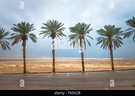 palm trees with the desert and dead sea as background - Stock Photo