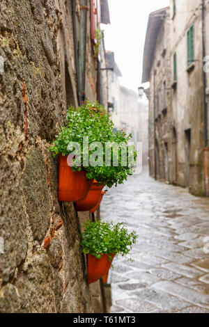 Green plants in pots on a wall in a alley - Stock Photo