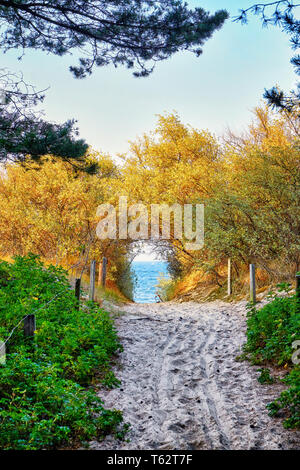 Trees and bushes on the way to the beach to the Baltic Sea. Zinnowitz on the island of Usedom. - Stock Photo