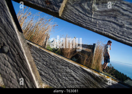 A young woman on the hills above Nelson, New Zealand, framed in the wooden gate of sheep pens - Stock Photo