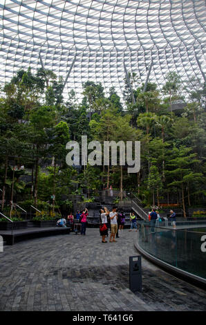 Inside the arboretum of the new Jewel at Singapore Changi airport - Stock Photo