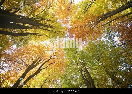 Primeval Forest Sababurg, Hesse, Germany - Stock Photo