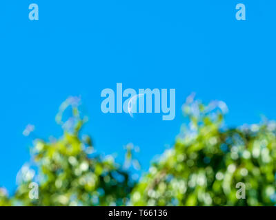 Crescent moon at midday with blue sky and green tree branches in the foreground out of focus - Stock Photo