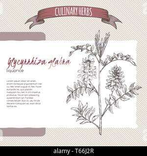 Glycyrrhiza glabra aka liquorice sketch. Culinary herbs series. - Stock Photo