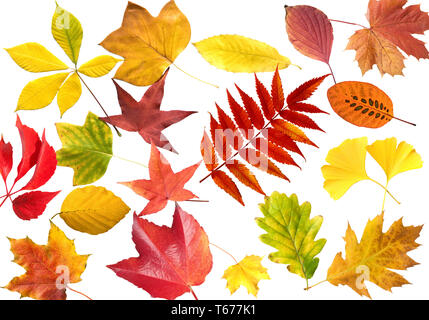 autumn leafs collection - Stock Photo