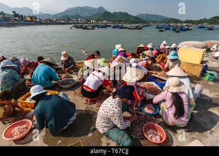 Workers on the edge of the water in Nha Trang harbor shell shrimp brought in by the fishing fleet seen in the distance - Stock Photo