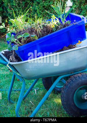 Several Green Plants in Garden Carts with Spring Garden Works. A gardener's cart. Concept: Gardening and Agriculture - Stock Photo