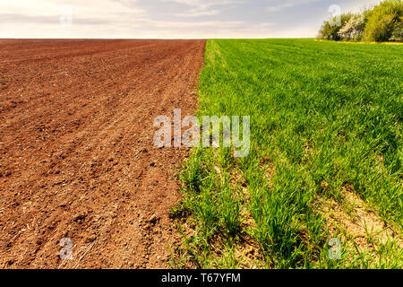 Furrows row pattern in a plowed field prepared for planting crops vs growing wheat crop. Horizontal view in perspective with cloud and blue sky and fo - Stock Photo