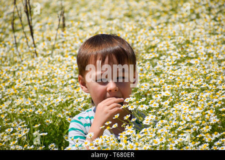 boy in daisy flowers, field with daisies blooms. - Stock Photo
