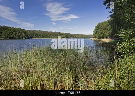 Beautiful Landscape in Uckermark, a Region in northeast Germany, Brandenburg - Stock Photo
