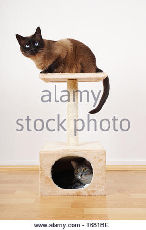 two cats on cat tower - Stock Photo
