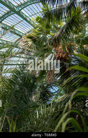 Domed roof of the Winter Garden, at the Royal Greenhouses at Laeken. The Winter Garden houses palms, ferns and exotic tropical plants - Stock Photo