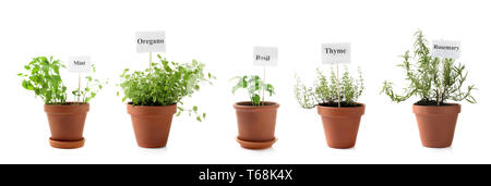 Different fresh herbs in pots on white background - Stock Photo