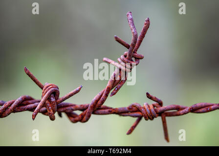 Macro photography of a piece of rusted barbed wire used in fences at the countryside of the Andean mountains of central Colombia. - Stock Photo
