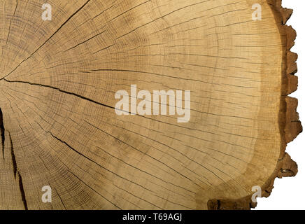 Large picture of a tree trunk cross section - Stock Photo