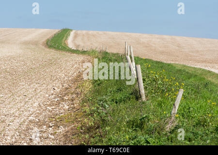 path and grass edge with old fence leading up through chalky fields leading up to  St. Roche's Hill, the Trundle, Sussex, UK, April. South Downs. - Stock Photo