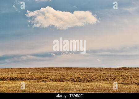 harvested field fith cloud on blue sky - Stock Photo