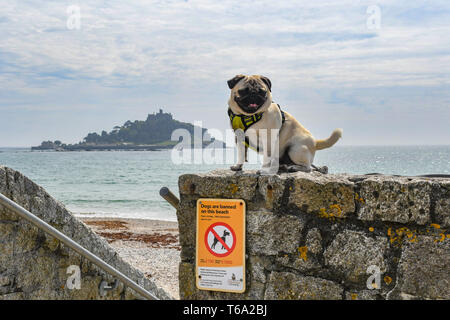 Dog sitting on wall above No dogs on beach sign in front of St Michaels Mount - Stock Photo